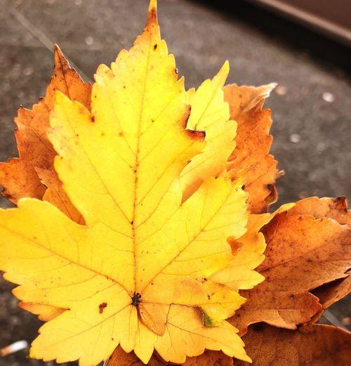 Autumn what