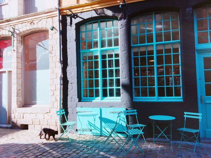 Strolling Streetphotography Cafe Green Color Sunlight Cat France Travel EyeEm Selects Architecture Built Structure No People Building Window Building Exterior Day Outdoors