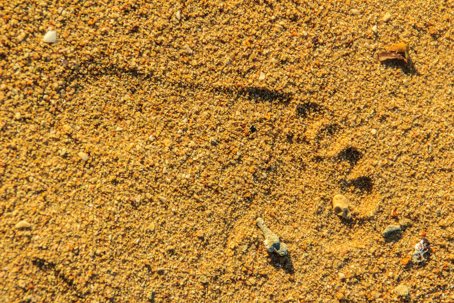 Close up of footprints on the sandy beach Sand Beach Sandy Lands Animal Themes Animals In The Wild Backgrounds Close-up Day Full Frame High Angle View Mammal Nature No People Outdoors Sand Sand & Sea Sand And Sea Sand Background Sand Backgrounds Sand Path Sand Pattern Sand Patterns Sand Textue Sand Texture Sand Textured Sandy Sandy Beach Textured