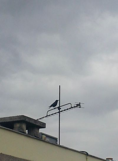 Antenna - Aerial Cloud - Sky Cloudy Crow Low Angle View No People Paris ❤ Paris, France  Parisian Crow Roof Sky