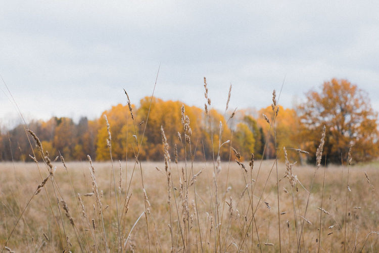 Autumn Beauty In Nature Day Grass Growth Nature Outdoors Sky Sweden