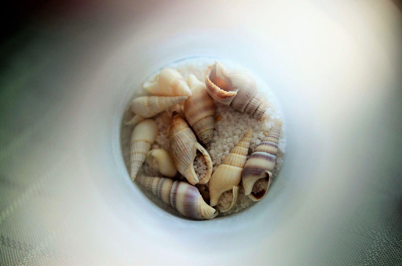 Close-up of seashells inside bottle