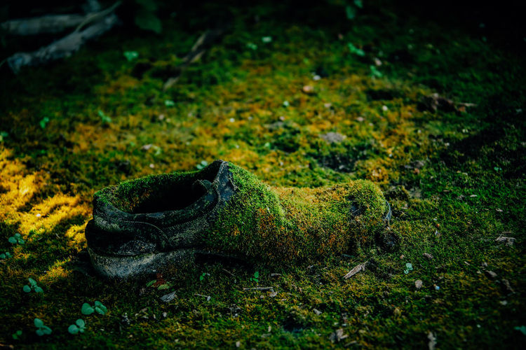 Close-Up Of Lost Shoe