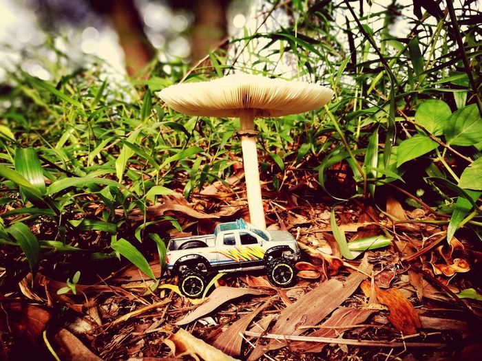 Mushroom Nature Growth Fungus Day No People Outdoors Toadstool Close-up Beauty In Nature Freshness Fly Agaric Mushroom Hardtoys 4wheeldrive Just For Fun Rethink Things