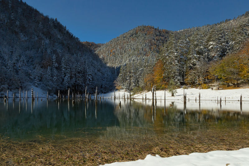 Reflection of trees in lake in winter