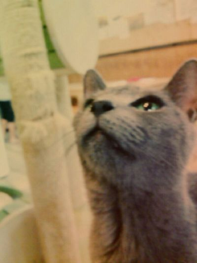 Cat Korea