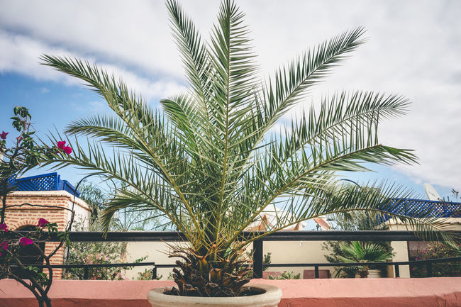 At Riad Close-up Day Growth Horizontal Moroccan Plant Morocco Morocco Beauty Nature No People Outdoors Palm Tree Plant Roof Garden Roof Terrace Sky Tree