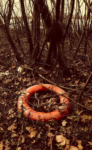 Abandoned Boat Ride Day Field Forest Life Saver Life Saving Lost River Cave Nature No People Orange River Outdoors Ring Ring In Wo Rusty S.O.S Tree Water Rings