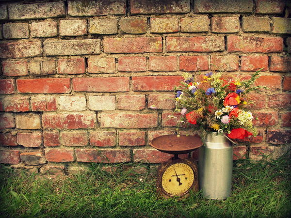 Beauty In Nature Blooming Brick Wall Close-up Day Flower Fragility Grass Green Green Color Growing Growth In Bloom Kitchen Scale Milk Churn Nature No People Old Outdoors Petal Plant Red Vintage Cars