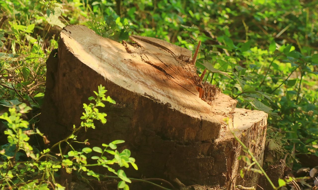 CLOSE-UP OF WOODEN LOG IN FIELD
