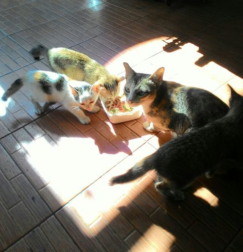 A family cat. Cats Family Cat 4cats Four Cats Eating Four Cats Pet Mother And Child Family Animals Naturelover Light And Shadow