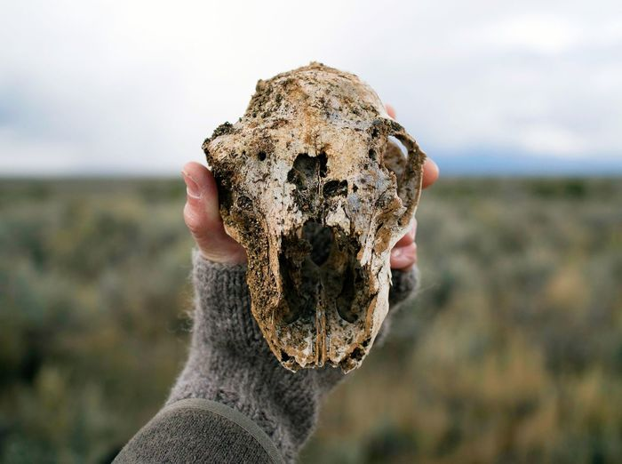 Close-up of hand holding animal skull against sky