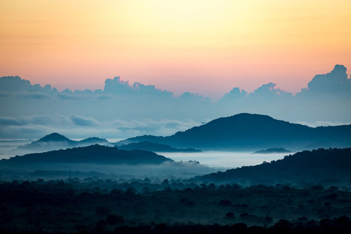Beauty In Nature Blue Cloud - Sky Dambulla Day Dramatic Sky Fog Forest Landscape Lion Mountain Mountain Range Nature Outdoors Pidurangala Pine Woodland Rock Scenics Sky Social Issues SriLanka Sun Sunrise Sunset WoodLand