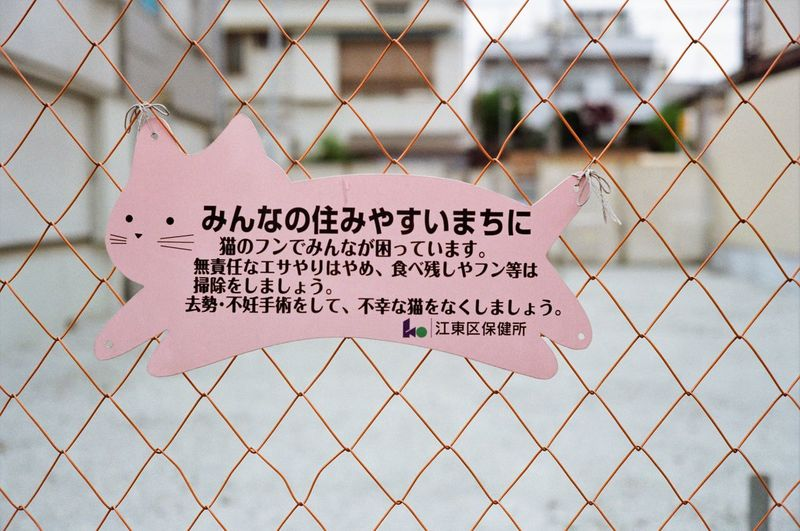 Cat friendly Cat Flim Style Olympus 35mm Film Cat Lovers Tnr Text Communication Western Script Chainlink Fence Sign Fence Safety No People Protection