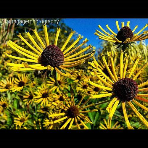 Nikonshots AspiringPhotographer Nikonphotography Nikon Nikon_photography_ Nature Flowers Beauty Longisland