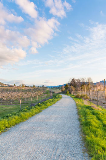 Pathway through orchards in spring at sunset April KVR Trail Kettle Valley Rail Trail Naramata Naramata Bench Orchards Path Travel Bike Path Blue Sky Clouds Evening Evening Sky Green Grass Landscape Outdoors Road Rural Scene Sky South Okanagan Spring Sunset Sunset The Way Forward Tourism
