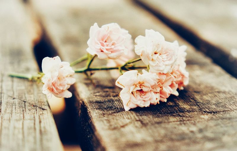 #photography #Nature  #JustMe #EyeEmNewHere EyeEm Selects Flower Head Flower Petal Close-up Plum Blossom Rose - Flower Single Flower
