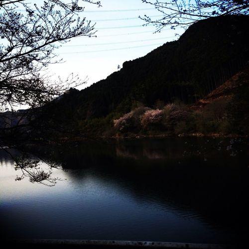 Scenery Shots