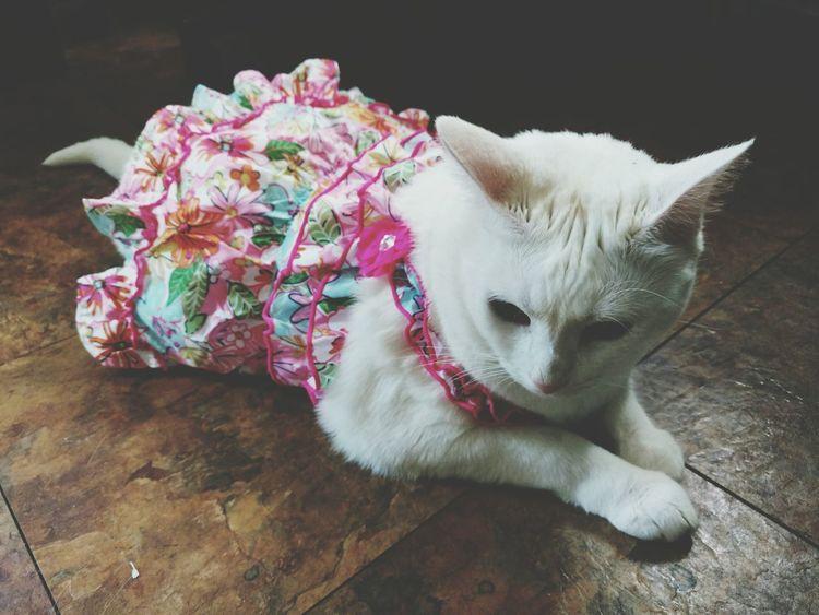Cat Dress Pet Clothes Cat Clothes Pets White Cat Funny Funny Pets
