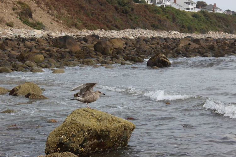 Bird Flapping On Rock In River