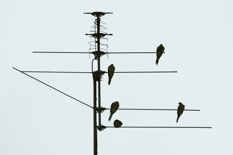 Bird Hang Out Sky Bird Vertebrate Animal Themes Clear Sky Animal Animal Wildlife Perching Animals In The Wild Low Angle View Technology Group Of Animals Connection Nature No People Silhouette Outdoors