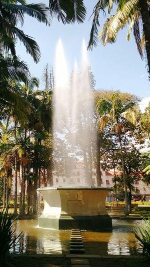 Nature Brazil Fountain Square Water Trees Poços De Caldas