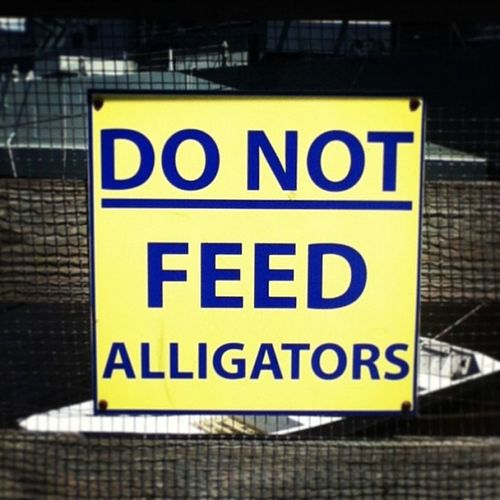 Alligators? ??Donotfeedalligators Do Not Feed  alligators ussnorthcarolina battleship memorial yellow blue sign