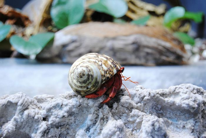 Animal Photography Animal Sea Animal Snail🐌 Snail Snailshell Snailfriend Hermit Crab Crab Little Animal Home Sweet Home Small