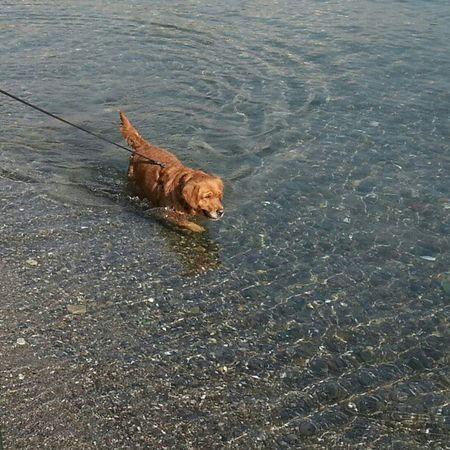 Istanbul Pazar Deniz Köpek sahilkis