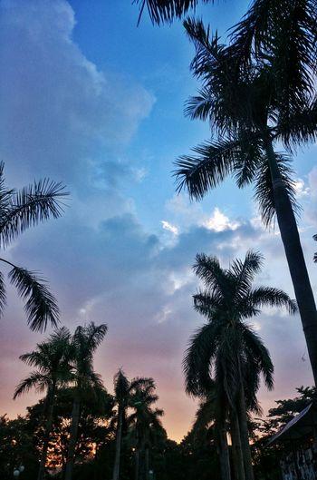 Sunrise Sky Sky And Trees Sky And Clouds Blue Sky Palm Trees Vnua