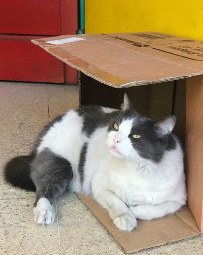 Cat Cat House Daydreaming Distracted Red Color Yellow Color Domestic Cat Pets Domestic Animals Animal Themes Mammal One Animal Feline Whisker No People Portrait Cardboard Box Day Outdoors Cardboard