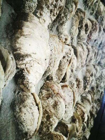 Oyster shell deco Nature No People Indoors  Beauty In Nature Day Close-up Architecture Oyster  Shells🐚