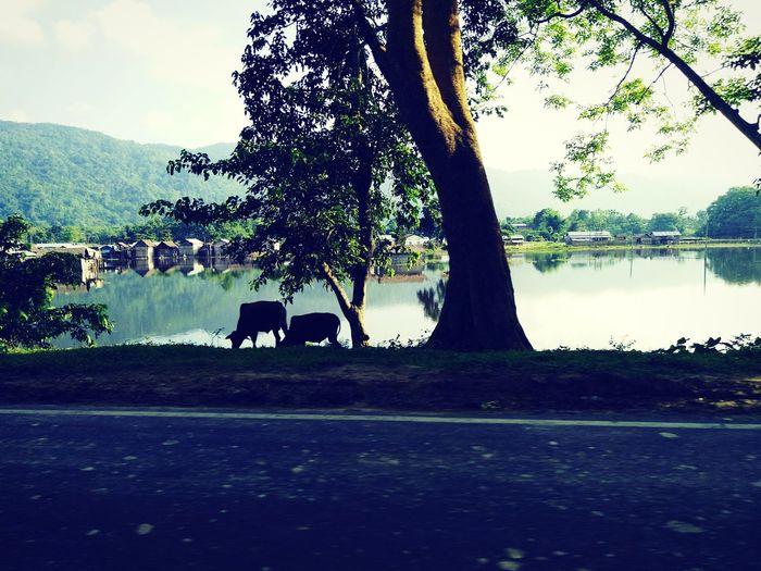 On my way to kaziranga national park... One_horn_rihno... Its Beautiful..