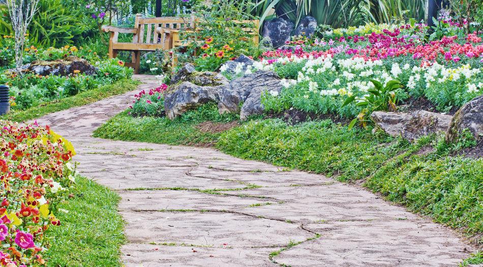 Footpath by flowering plants in garden
