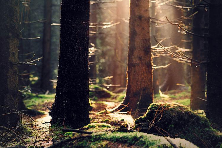 Harz Ilsenburg