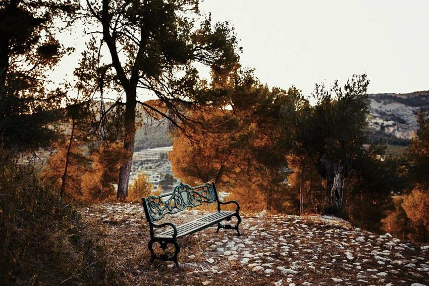 Autumn Autumn Colors Autumn Leaves Autumn🍁🍁🍁 Beach Beauty In Nature Carlosluccafoto Chair Day Empty Fotografodebodas Nature No People Outdoors Sand Scenics Tranquility Tree Weddingphotographer