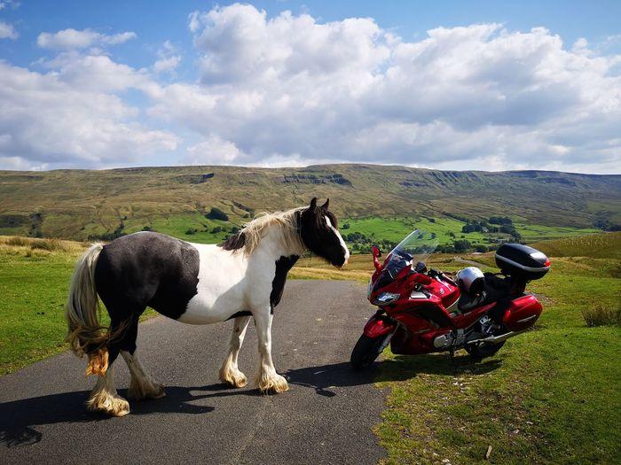 Horse Motorbike