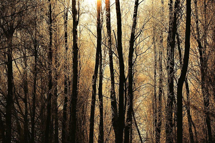 NIKON D7100 AF-S NIKKOR 18-105mm 1:3.5-5.6G ED. f5.6, 1/2000, iso100, 98mm Morning Sun Ski Trip February Birch Grove Sun THE LIGHTS OF A SUN