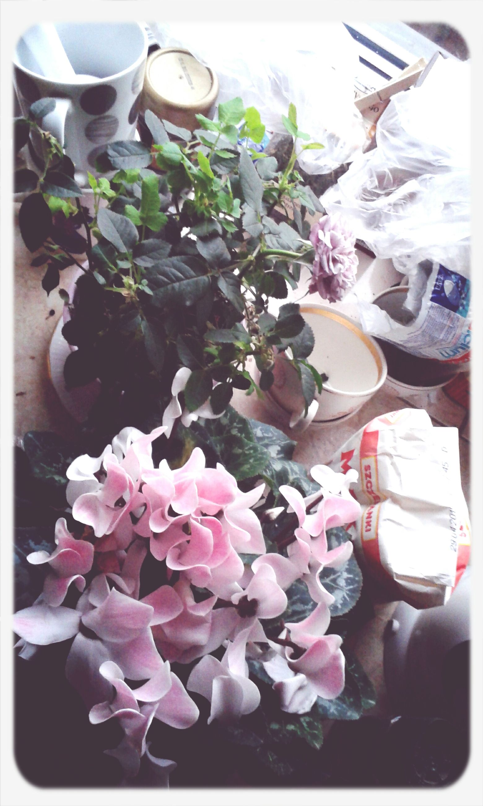 flower, indoors, freshness, transfer print, vase, table, petal, auto post production filter, fragility, bouquet, still life, potted plant, high angle view, close-up, variation, bunch of flowers, flower arrangement, flower head, plant, growth