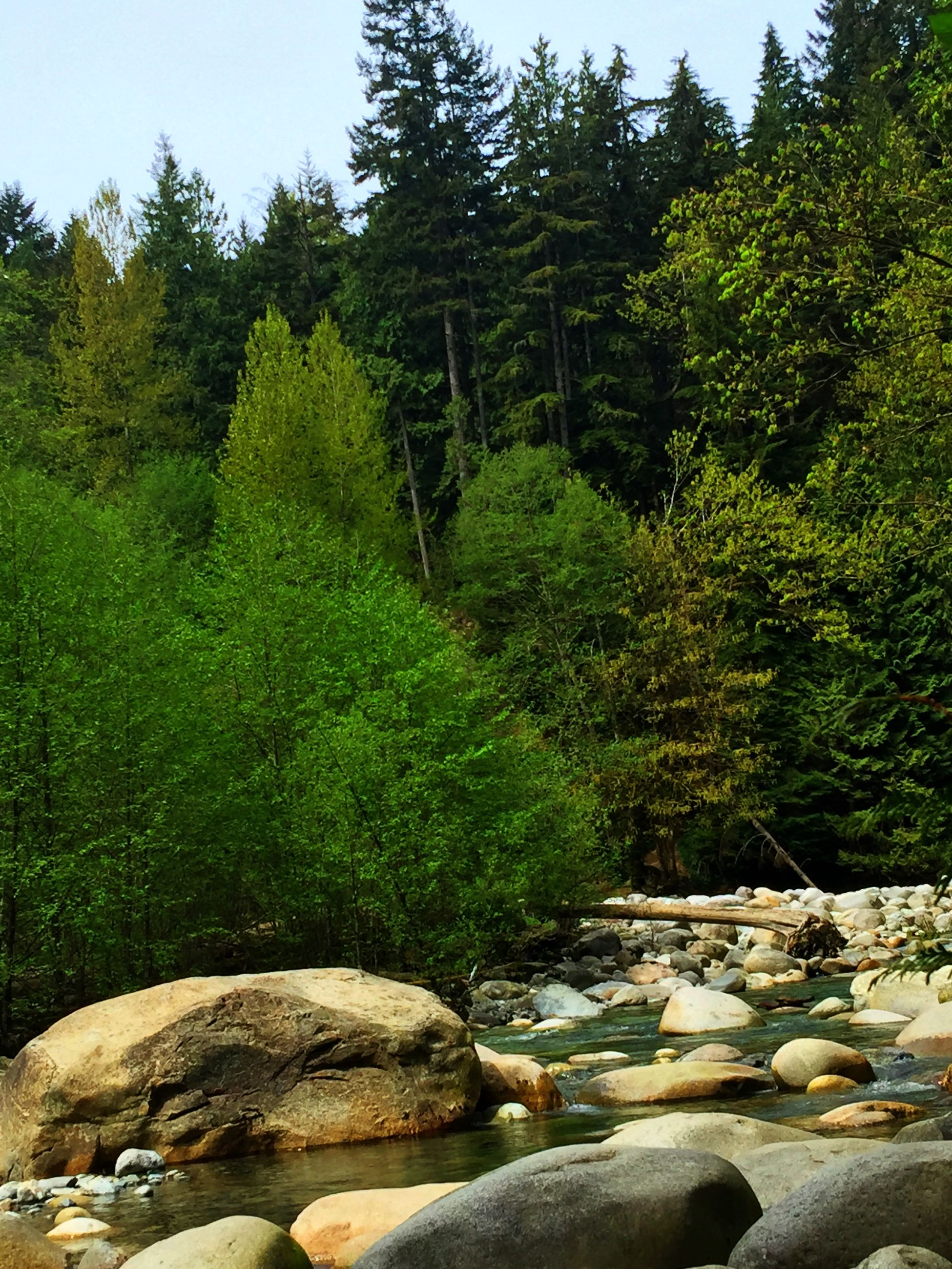 tree, tranquility, tranquil scene, green color, rock - object, nature, scenics, beauty in nature, forest, water, stream, growth, non-urban scene, landscape, plant, day, stone - object, river, lush foliage, idyllic