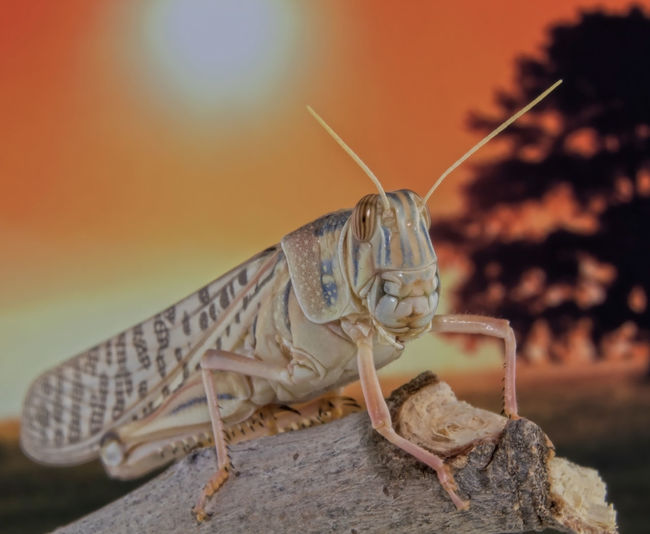 Close-up of locust on a rock
