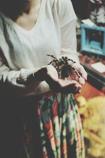 🕷️ Spider