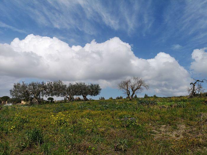 Tree Rural Scene Flower Agriculture Field Sky Grass Landscape Cloud - Sky
