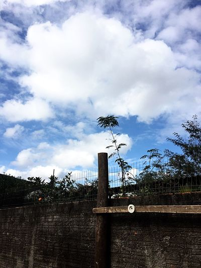 Sky Tree Cloud - Sky No People Low Angle View Built Structure Outdoors Growth Building Exterior Day Architecture Nature Photography BrazilPhoto EyeEm Best Edits Solar Energy Tranquility EyeEm