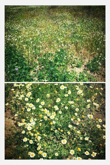 Campo Y Flores