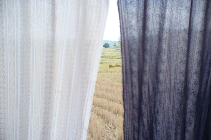 Barrier Close-up Curtain Day Environment Field Grass Land Landscape Nature No People Outdoors Plant Rural Scene Security Sky Textile Tranquility Tree Window