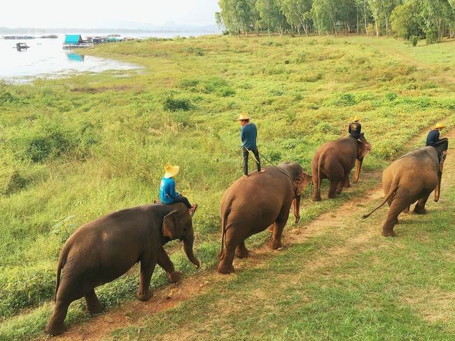 The Journey Is The Destination The Journey Is The Destination Our days in Thong Pha Phum were amazing. A place where there are nothing to do, but so much to live. Thailand never ceases to amaze us. On The Way Elephant Ride Free Globe Earth Adventure Delicieusevie Travel Discover  Share