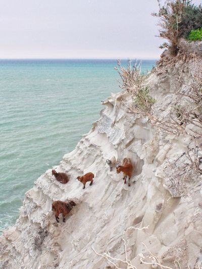 Fill your heart and your mind with Nature! Goats Wildlife & Nature Goat Life Wildlife & Nature Mediterranean  Rock White Panorama Beach Sea Sand Horizon Over Water Nature Day Tranquility Outdoors Tranquil Scene Beauty In Nature Sky Scenics EyeEmNewHere Go Higher