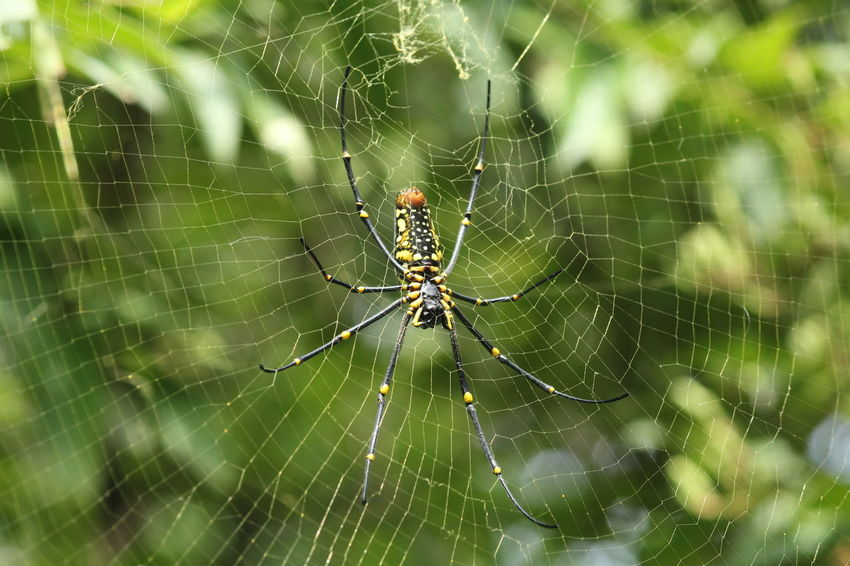 Spider Spiderweb Nature Photography Nature Green Cute Photography