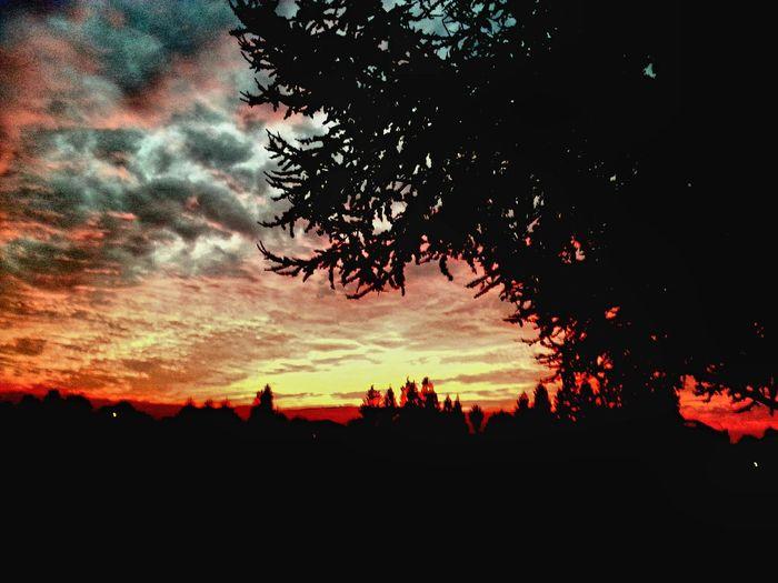 Romance Romance Of Nature Romance, Love, Concept,spring, Summer EyeEm Selects Bay Area California California Love Dusk Evening Nightfall Sundown, Nightfall, Close Of Day, Twilight, Dusk, Evening Tree Sunset Silhouette Dramatic Sky Sky Cloud - Sky Landscape Sky Only